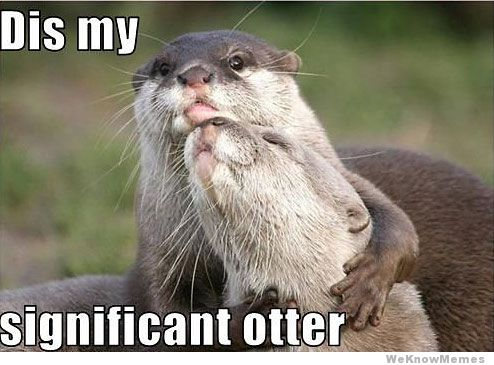 dis-my-significant-otter