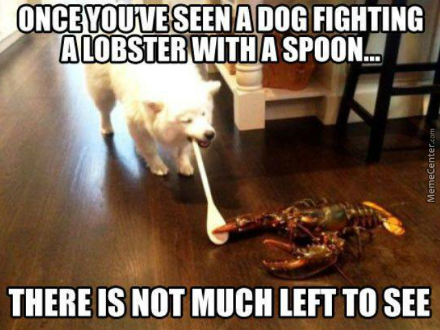 lobsters-are-immortal-that-dog-had-better-be-a-super-saiyan-to-put-on-a-fight-like-that_o_4082345
